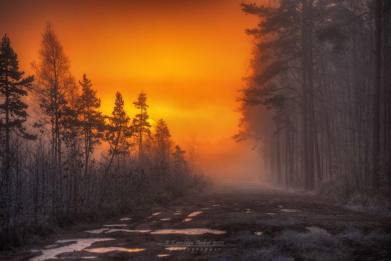 Морозное утро на лесной дороге...photo preview