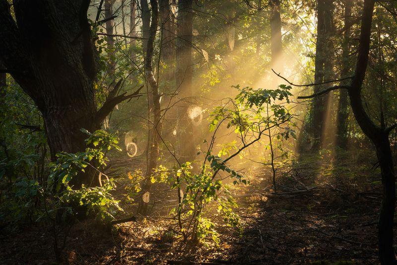 В утреннем светеphoto preview