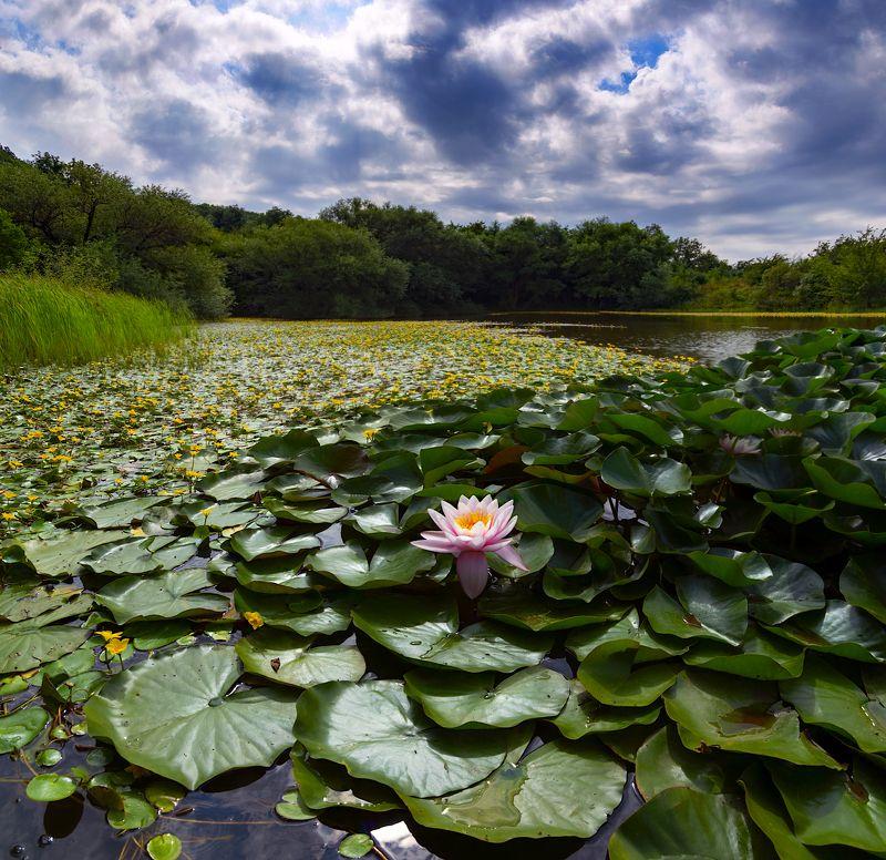 озеро,кувшинки,природа,пейзаж На озереphoto preview