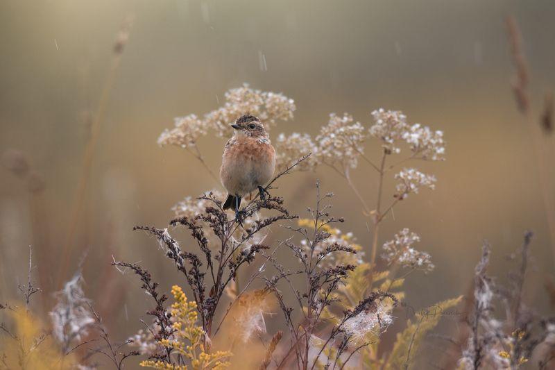 природа, лес, поля, огороды, животные, птицы, макро Осенние мотивыphoto preview