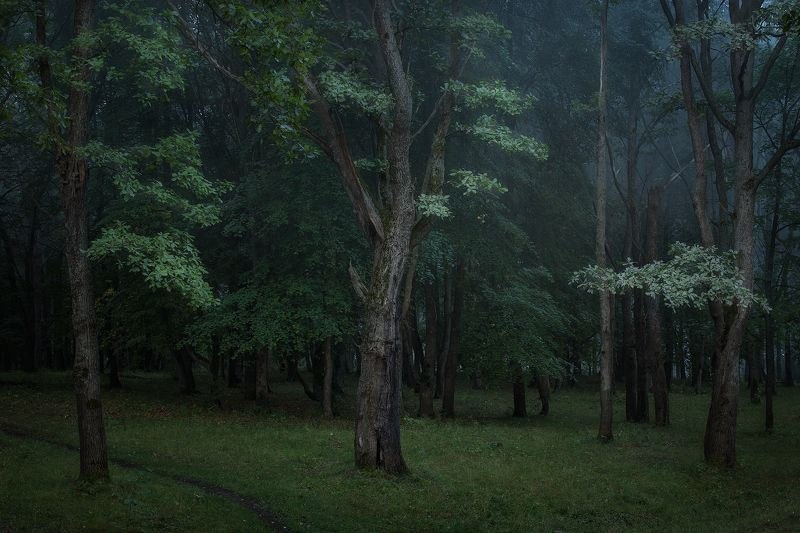 пейзаж природа деревья утро В ночи фото превью