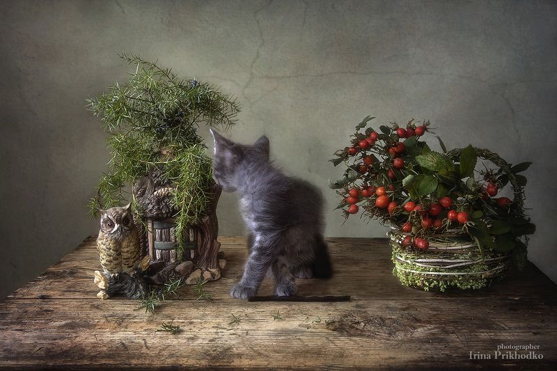 постановочное фото, домашние животные, натюрморт, шиповник, котенок Илька Как будто в сказочном лесу...photo preview