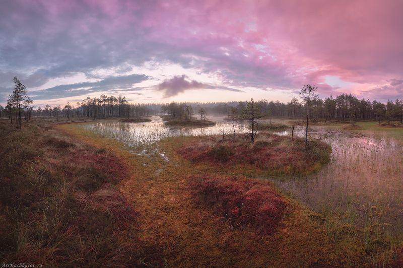 болото, ленобласть, ленинградская область, восход, рассвет, болотные топи, фототур \