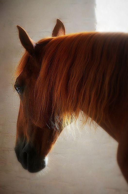 сергей алексеев, лошади, богдарня, петушки Огонёкphoto preview