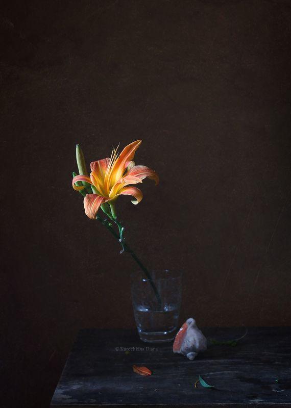 натюрморт, цветы, лилейник Цветок лилейникаphoto preview