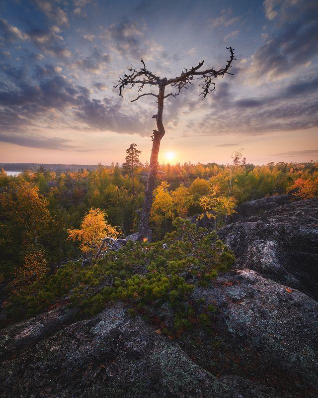 Ладожское озеро Ладожская осеньphoto preview
