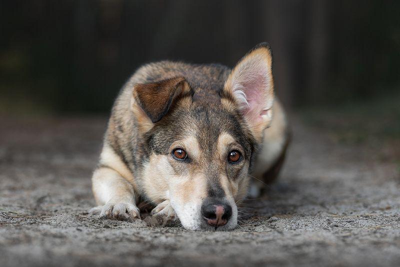 собака, животное, dog, взгляд, photo preview