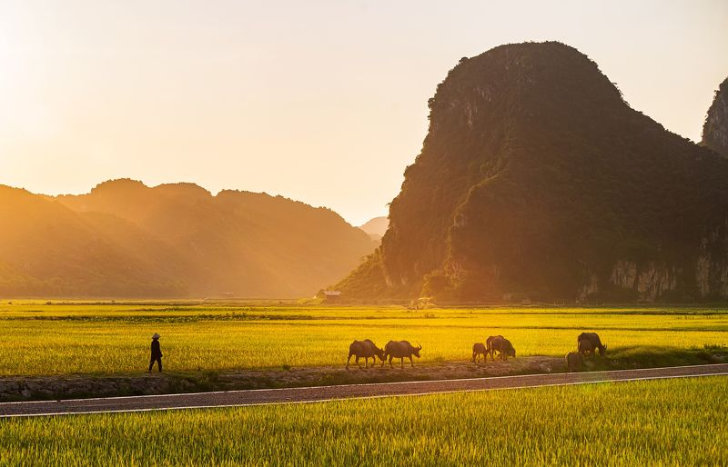 landscape, paddy field The ripe rice seasonphoto preview