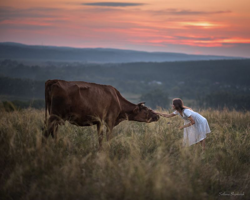 beauty, summer, emotion, portrait, animal, sunset, cow Don\'t be afraid of mephoto preview