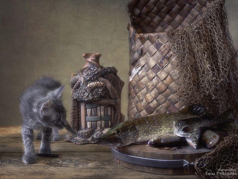 постановочное фото, котенок, домашние животные, щука, рыба, натюрморт, забавные питомцы По щучьему велениюphoto preview