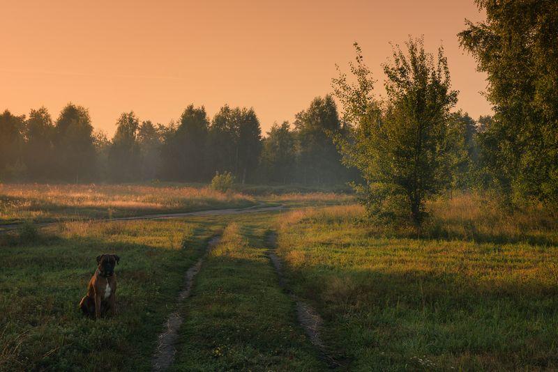 луг лето август рассвет собака В рассветную поруphoto preview