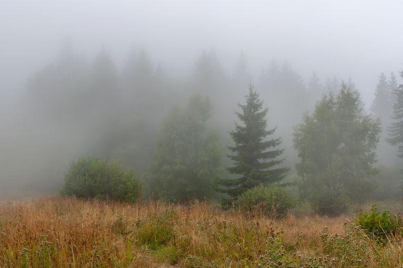 Осень  уже близко...photo preview