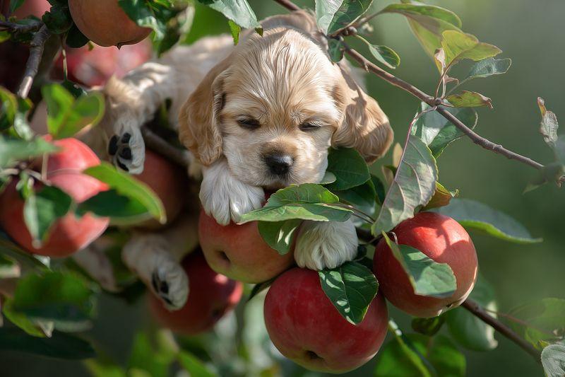 Яблочный спёс:)))photo preview