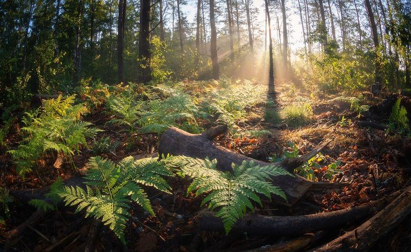 По лесным тропамphoto preview