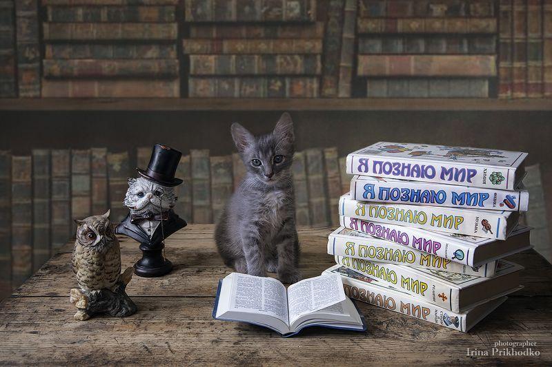 постановочное фото, домашние животные, питомцы, котенок, книги Скоро в школу!photo preview