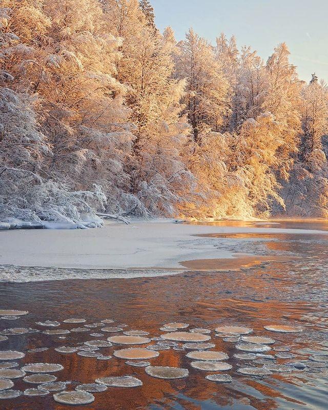 река, рассвет, мороз, зима Ледяные кувшинкиphoto preview