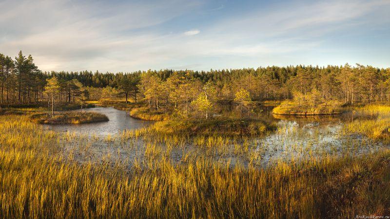 болото, ленобласть, ленинградская область, болотные топи, острова, север ленинградской области, выборгский район, последний день лета \