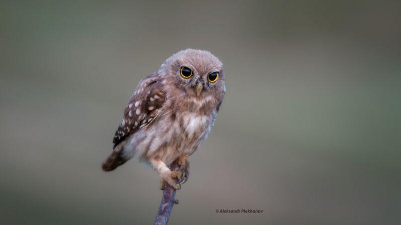 wildlife Встретить рассветphoto preview
