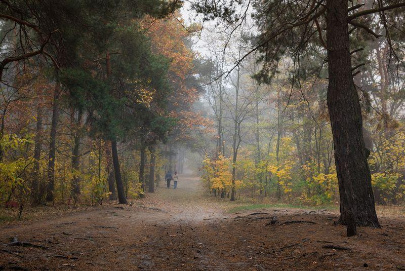 лес, осень, октябрь, утро, туман, рассвет Ты опора моя и  надежда. Будем вместе по жизни идти.photo preview