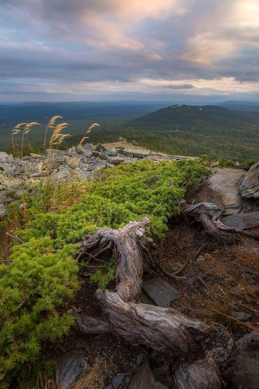 горы можжевельник вечер урал лето На склонах Уреньгиphoto preview