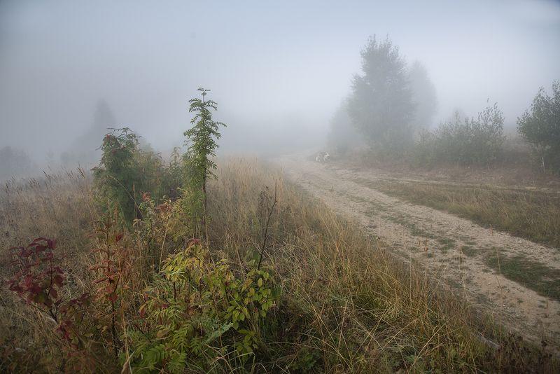По дороге с облаками... и с собакой)photo preview
