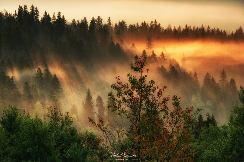 #tree #laser #fog #foggy #wood #nature #amazing #earth #pics #photo #best #poland Autumn...photo preview