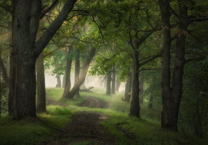 природа утро туман деревья По пути уходящего лета фото превью
