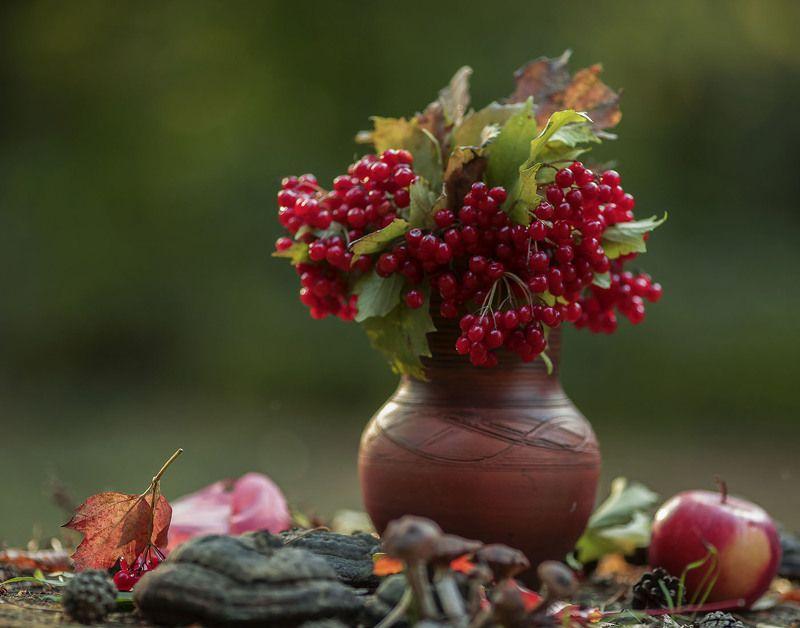осень, натюрморт,ягоды, калина,листья,яблоко, stilllife, autumn, berry,kalina, foliage,apple, nature Осенний этюдphoto preview