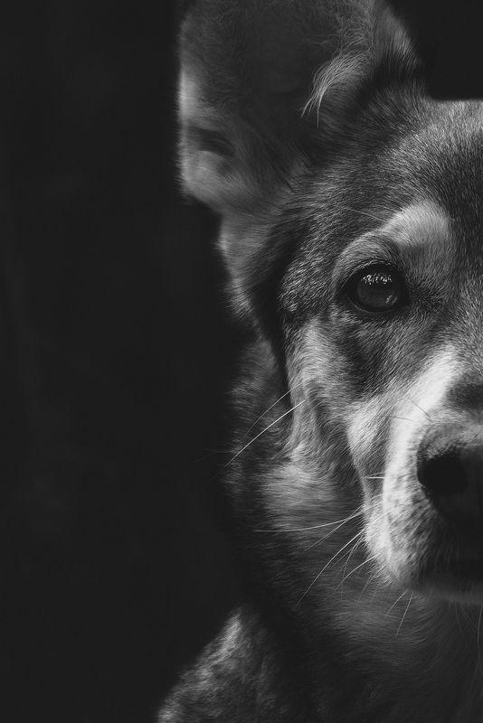 собака, животное, dog, взгляд, Уокерphoto preview