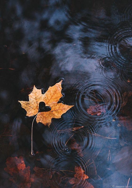 осень, кленовый лист, сердце, капли, любовь, нежность, \