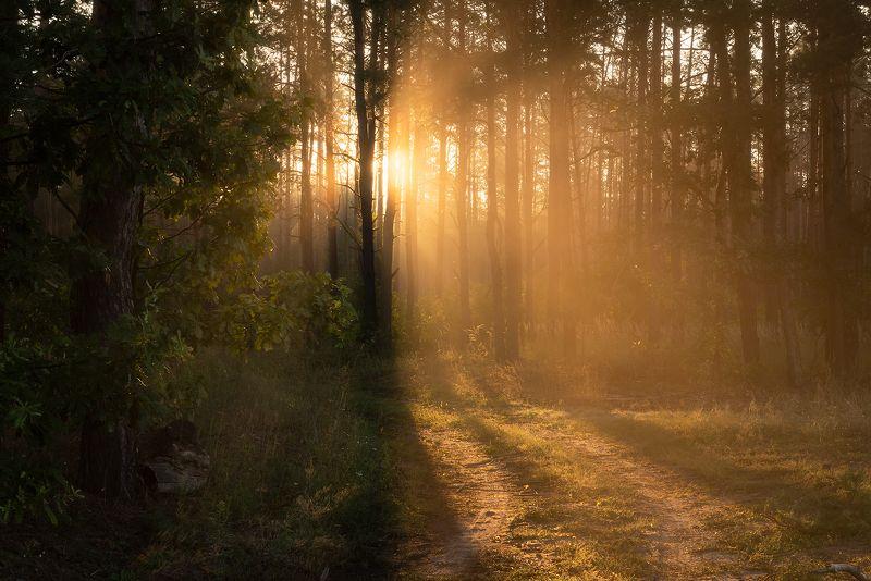 По лесной дорогеphoto preview