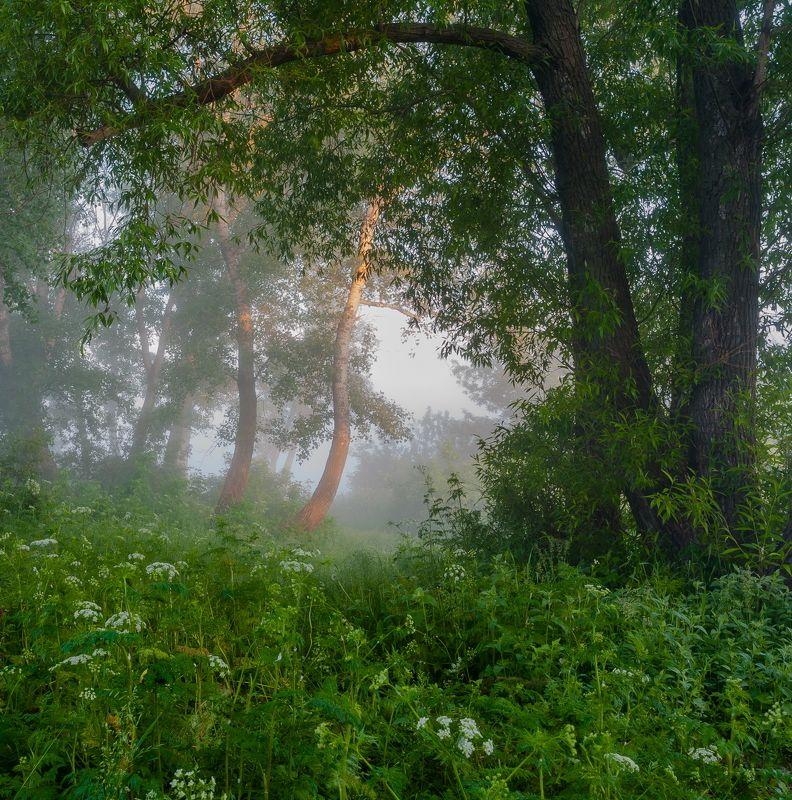 Туман лениво отступаетphoto preview