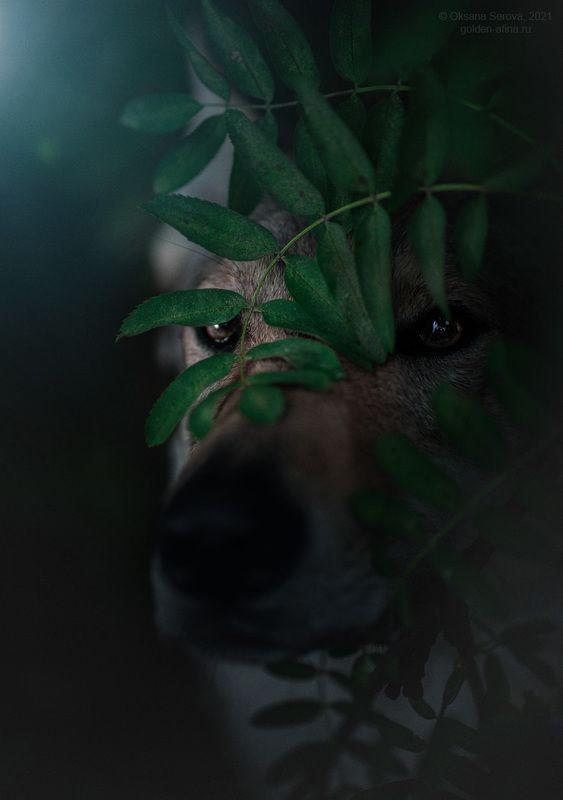 Кто страшный и большой наблюдает за тобой...photo preview