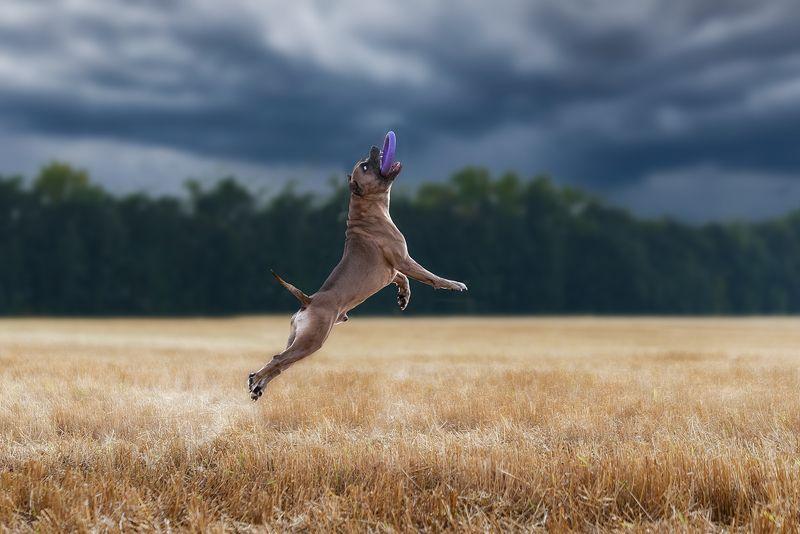 собака, животное, dog, с Полёт Арчиphoto preview