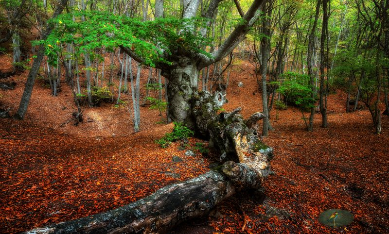 autumn Осеньphoto preview