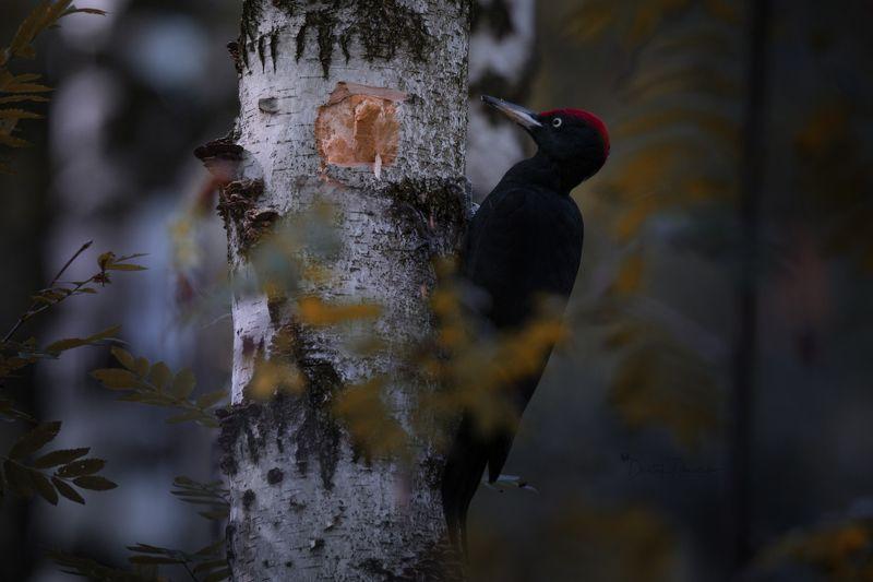 природа, лес, поля, огороды, животные, птицы, макро Осень наступилаphoto preview