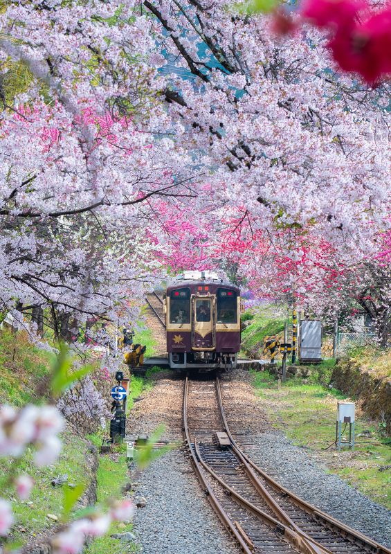 Spring Train photo preview