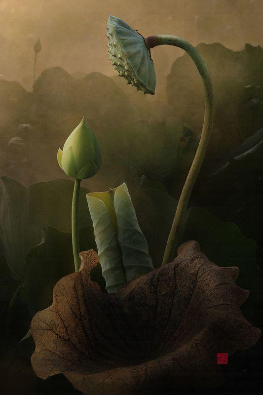 Lotus #6photo preview