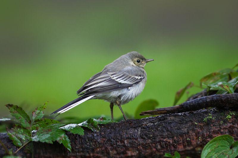 Птицы нашего лесаphoto preview