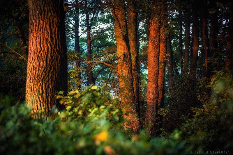 landscape, poland, light, summer, awesome, amazing, sunrise, sunset, lovely, nature, travel, forest, trees, orange, light, shadows First light фото превью