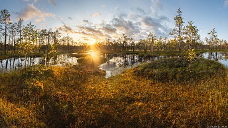 болото, болотные топи, ленобласть, ленинградская область, всеволожский район, острова, сосны \