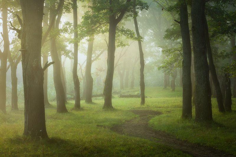 природа утро туман деревья Утро на лесной тропе. фото превью