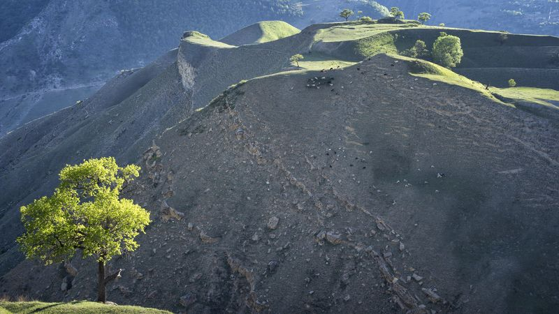 горы отара дерево На горе пасутся...photo preview