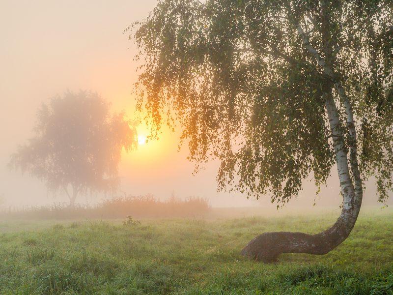 Туман, утро, березы Раствориться в розовом туманеphoto preview