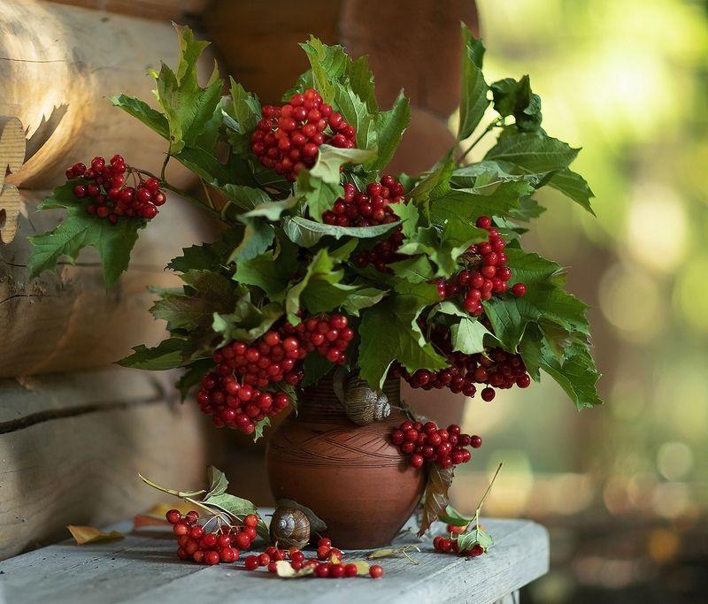 натюрморт,осень,ягоды калина,улитки, stilllife, berry, autumn, snail, nature Осенние мотивыphoto preview