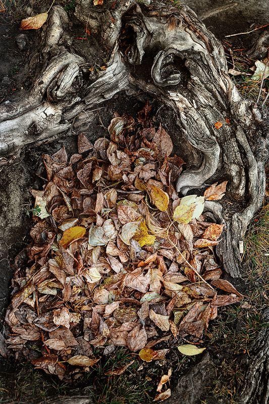 #autumn #leaf #naturephotography #nature #forest #yellow #season #plant #pattern #multicolor #colors #dry #tree #photography #photographer #ekaterinburg Осень...photo preview