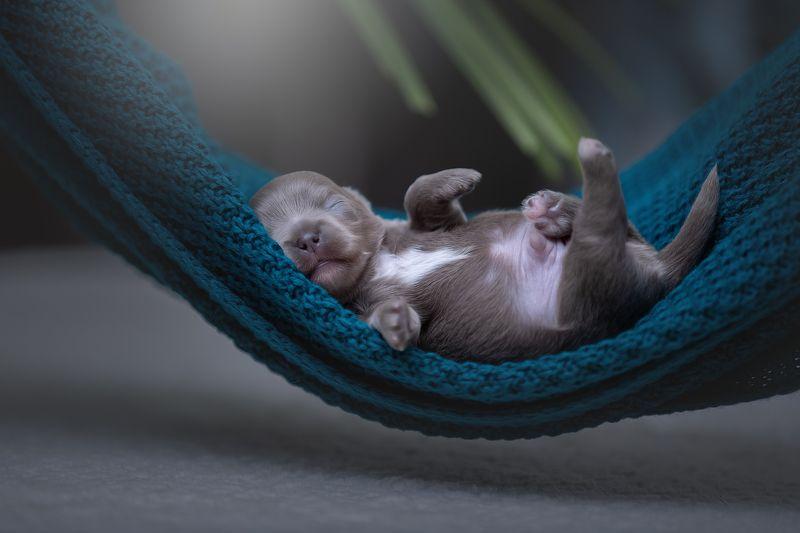 Новорожденный:)))photo preview