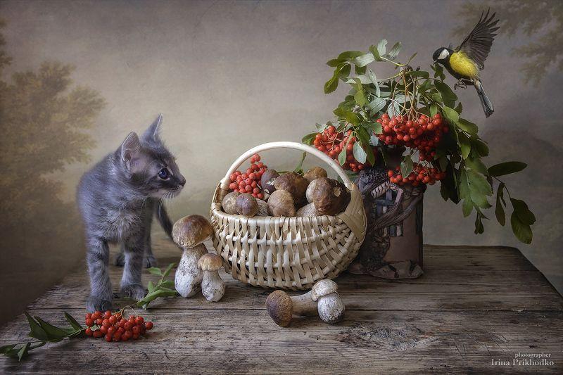 осень, грибы, рябина, котенок, домашние животные, питомцы, синичка, натюрморт, постановочное фото Путешествие в грибную сказкуphoto preview