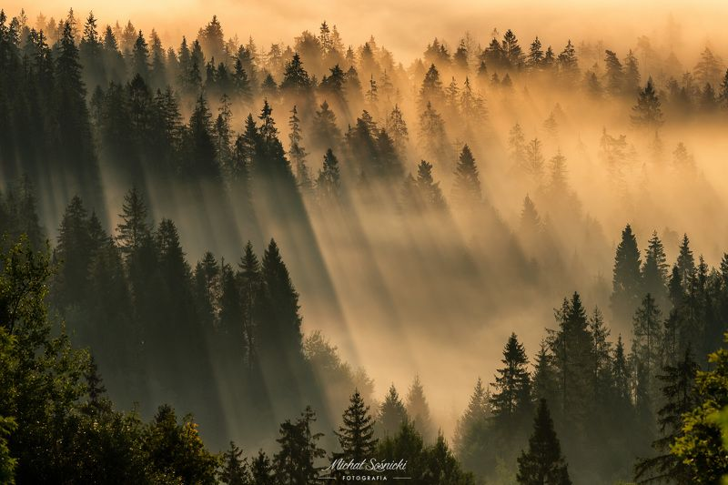 #poland #laser #fog #foggy #forest #sunrise #long #best #nature Laser...photo preview
