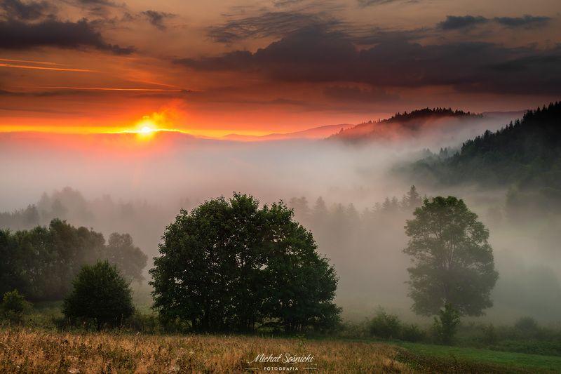 #poland #laser #fog #foggy #forest #sunrise #long #best #nature Foggy morning...photo preview